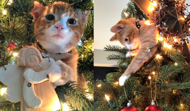 Keep Your Pets Safe During The Holidays :: YummyMummyClub.ca
