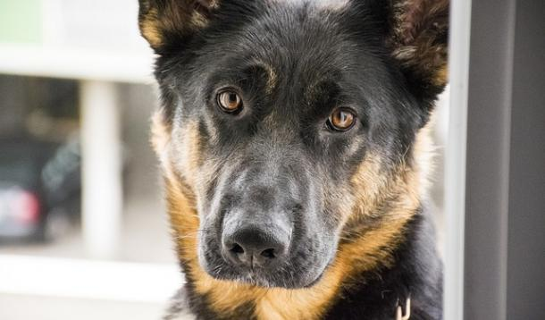Drug sniffing dogs hired by parents | YummyMummyClub.ca