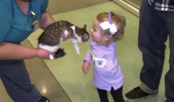 New Kitten Brings Joy to Little Girl | YummyMummyClub.ca