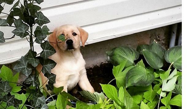 post puppy depression