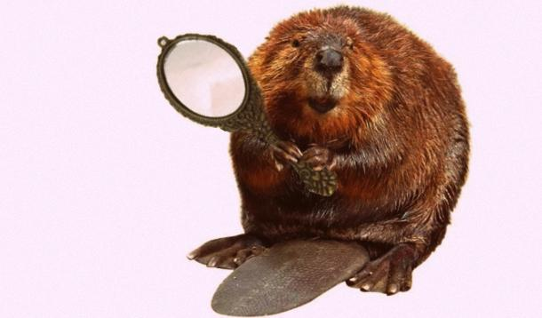 beaver holding a mirror