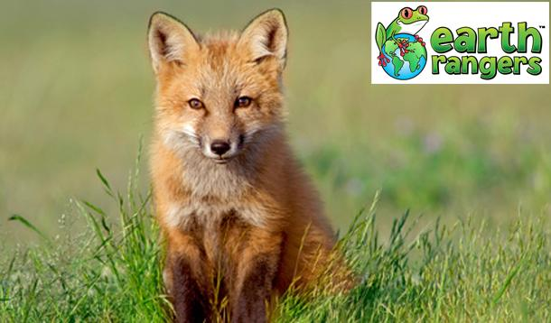 Empowering Kids to Protect Animals and Habitats :: YummyMummyClub.ca