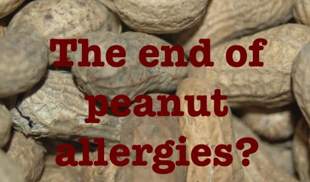 the end of peanut allergies?