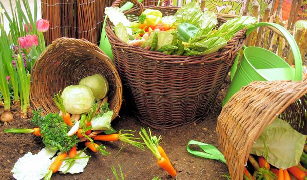 What Is Organic Produce Delivery and CSA?