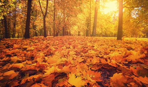 5 Reasons to Love Fall