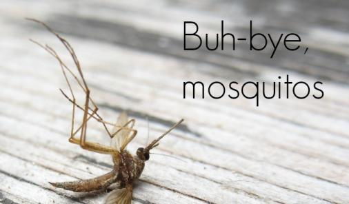 8 Tips for Avoiding Mosquitos