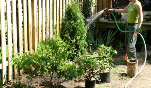 Need a little separation between you and the neighbours? Here's how to do it right! | Backyard Renovation | Gardening | DIY | YummyMummyClub.ca