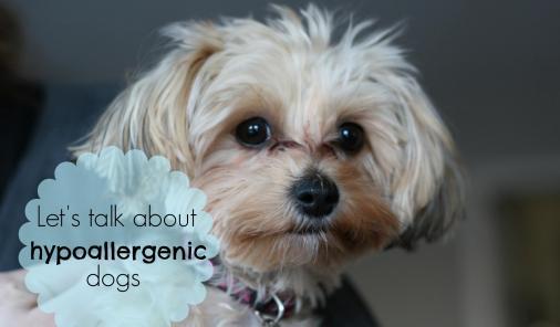 Do hypoallergenic dogs exist?