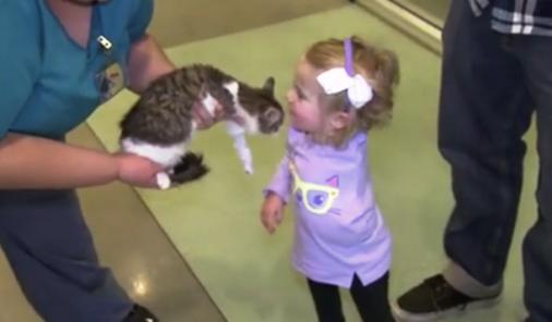 New Kitten Brings Joy to Little Girl   YummyMummyClub.ca