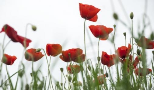 Remembrance Day A Moment of Silence | YummyMummyClub.ca