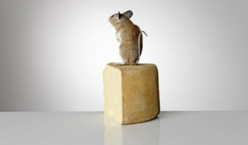 taxidermy_mouse