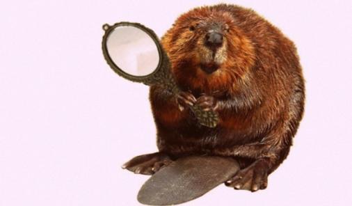 beaver holding a mirror