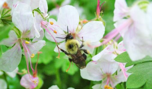 6 Tips for Planting Bee-Friendly Wildflowers In Your Outdoor Space