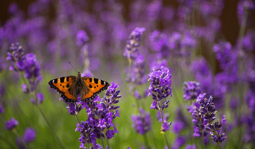 Plant Smart! 5 Edible Plants to Attract Bees, Butterflies, and People