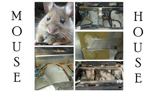 Rodents in your car