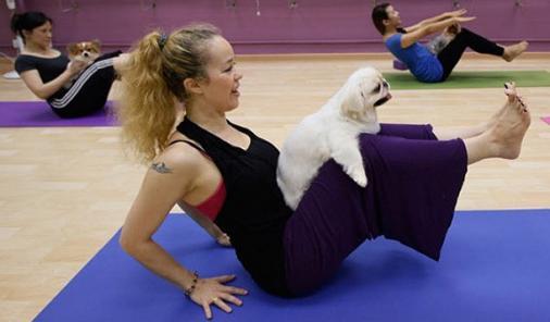 Dog_Yoga