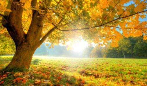fall allergy season tips