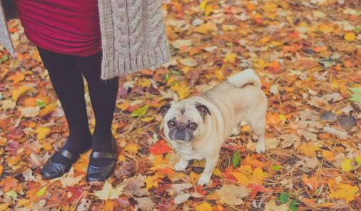 The Loss of a Furbaby | YummyMummyClub.ca