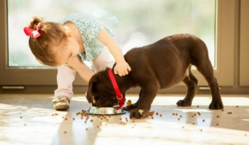 Reasons Your Family Needs a Dog | YummyMummyClub.ca