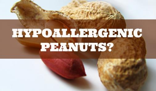 Could hypoallergenic peanuts help or hinder allergy education?