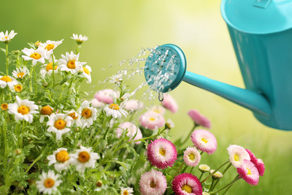 25 ways you can conserve more water today - Ways saving water watering garden ...