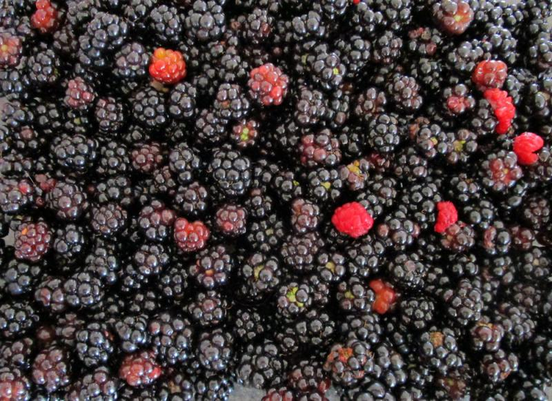 Pick blackberries.