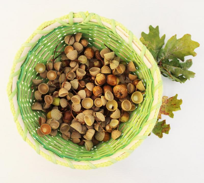 A basket full of acorns and acorn caps.