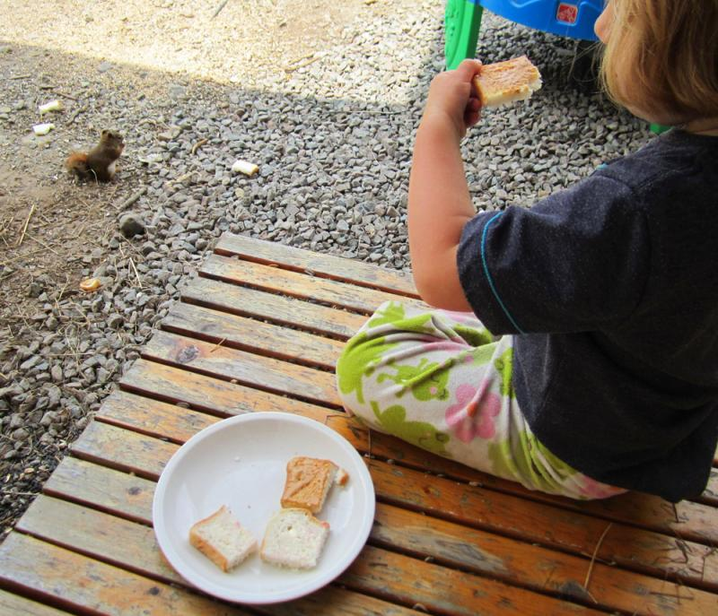Have lunch with a chipmunk.