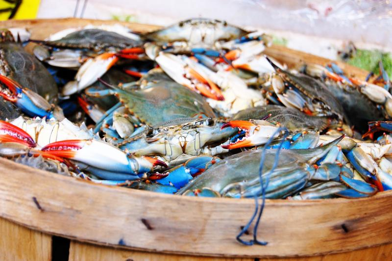 Canada 39 s top 10 sustainable seafood for What does sustainable fish mean